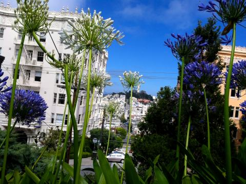 Photo : Coit Tower avec fleurs en premier plan