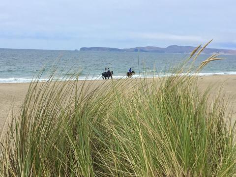 [Photo : immense plage à Point Reyes avec chevaux]
