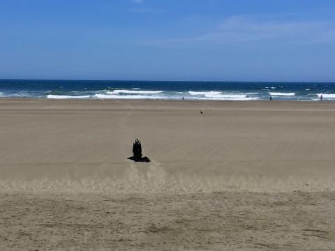 [Photo : l'Océan Pacifique à San Francisco]