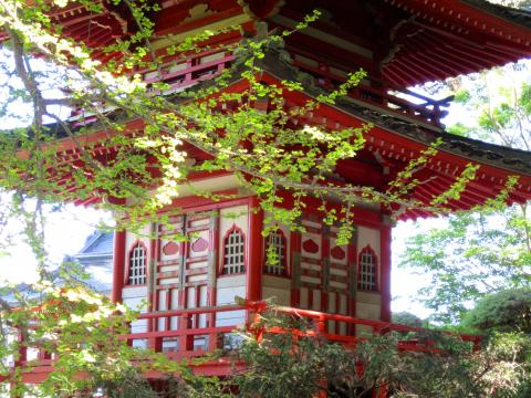 Photo : Pagode au printemps dans le Japanese Tea Garden