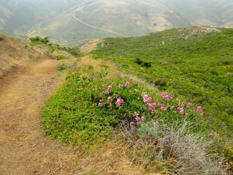 Photo : chemin de randonnée au milieu des collines