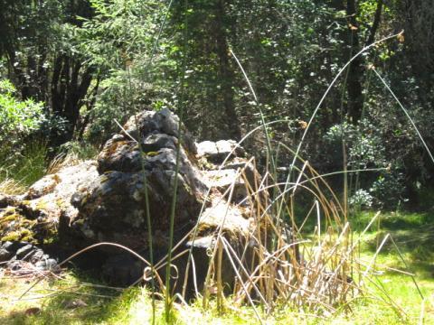 [Photo : Un coin de nature sur le Mont Tamalpais]