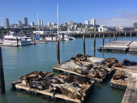 colonie sea lions et marina à Fisherman's Wharf