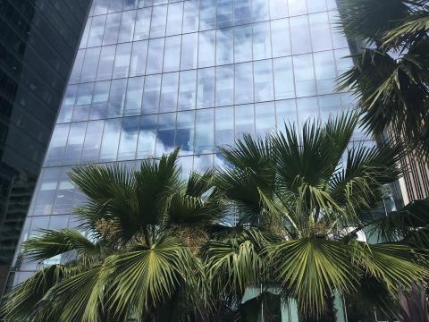 reflet des palmiers sur une tour de verre SOMA San Francisco