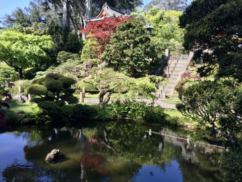 Photo : Jardin japonais San Francisco au printemps