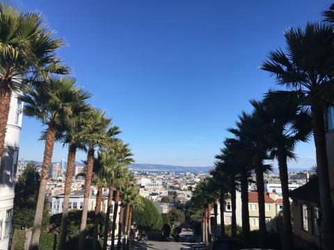 rue en pente avec palmier et vue sur la Baie de San Francisco