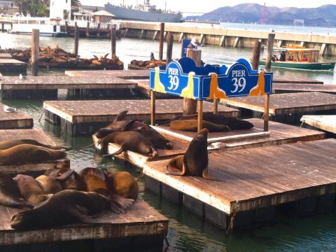 Photo : Otaries à Fisherman's Wharf