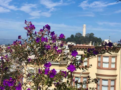 Photo : fleurs et Soit Tower San Francisco