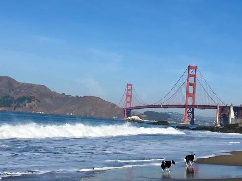[Photo : San Francisco Golden Gate Bridge]