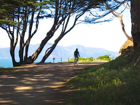 Photo : cycliste dans un sous bois