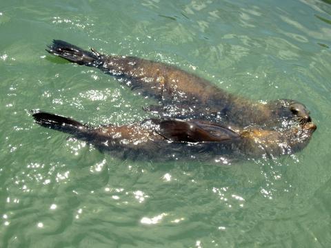 Photo : Les phoques du Pier 39